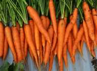 Sve što niste znali o šargarepama