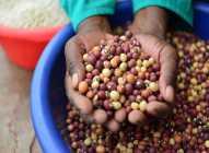 Osnovne karakteristike kuhinje Zimbabvea