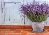 Saksijsko uzgajanje bilja: lavanda