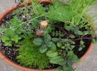 Saksijsko uzgajanje bilja: kim