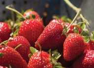 Kako jagode utiču na kožu lica?