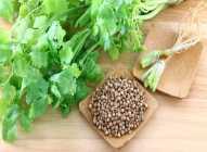 Korijander – odličan za zdravlje bubrega