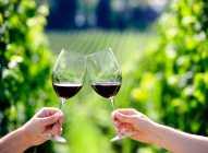 Zašto se kucamo čašama dok pijemo vino?